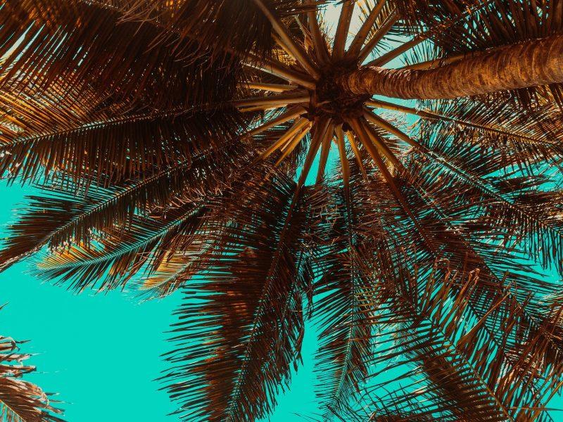 comment entretenir un palmier